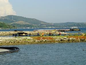 村人の魚とりの様子(水面を棒でたたいて魚を網に追い込んでいます)